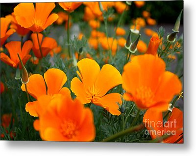 Metal Print featuring the photograph Poppies by Edward R Wisell