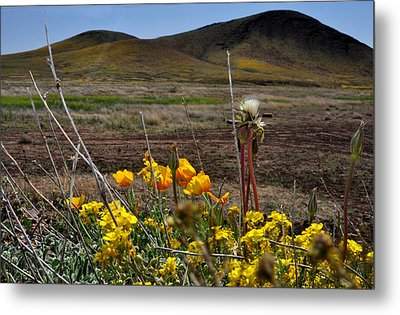 Poppies In The Field Chiracahua Mountains Metal Print by Diane Lent