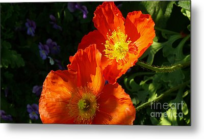 Poppies Metal Print by Jeanne  Woods