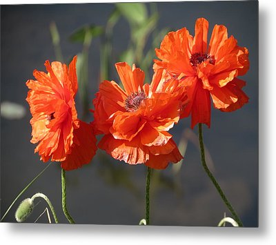 Metal Print featuring the photograph Poppies by Rebecca Overton