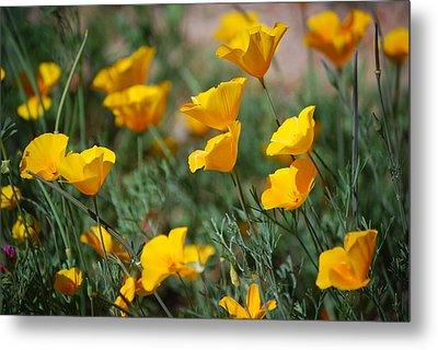 Metal Print featuring the photograph Poppies by Tam Ryan