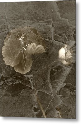 Poppies Under Ice Metal Print