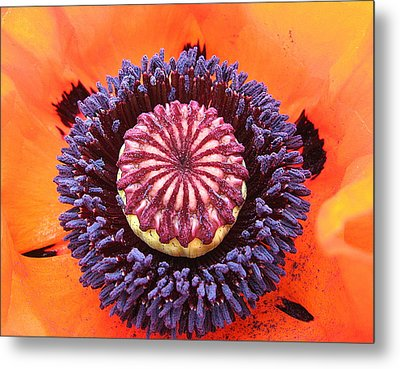 Poppy Delight Metal Print