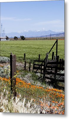 Poppy Fences Metal Print by Ivete Basso Photography