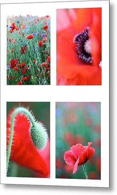 Poppy Field 1 Metal Print by AR Annahita