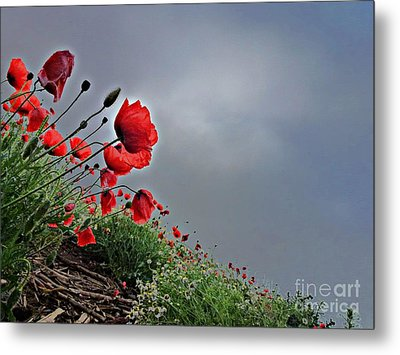 Poppy Field After Summer Storm Metal Print by AmaS Art