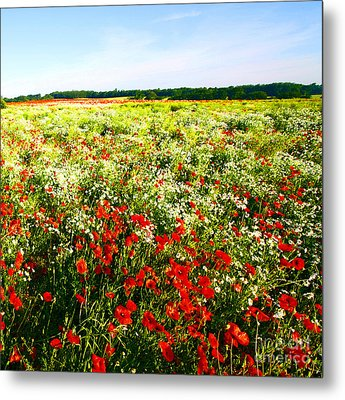 Poppy Field In Summer Metal Print by Craig B