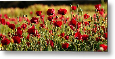 Metal Print featuring the photograph Poppy Fields Forever by Uri Baruch