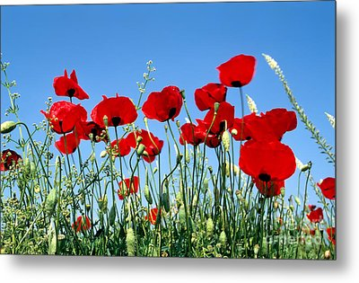 Metal Print featuring the photograph Poppy Flowers by George Atsametakis