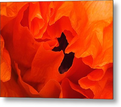 Metal Print featuring the photograph Poppy by Gene Cyr