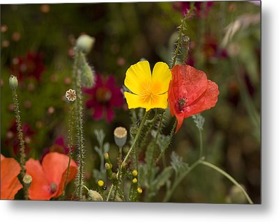Metal Print featuring the photograph Poppy Love by Mark Greenberg