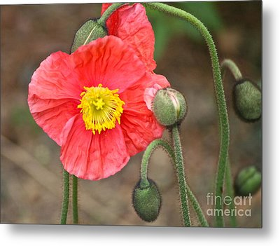 Poppy Power Metal Print by Eve Spring