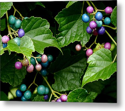 Porcelain Berries Metal Print by Lisa Phillips