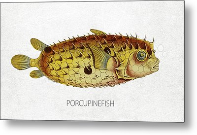 Porcupinefish Metal Print by Aged Pixel