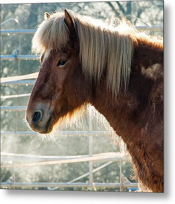 Portrait Of A Brown Horse Metal Print