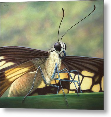Portrait Of A Butterfly Metal Print by James W Johnson