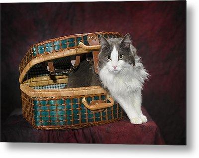 Portrait Of A Cat In A Basketst. Albert Metal Print by Corey Hochachka