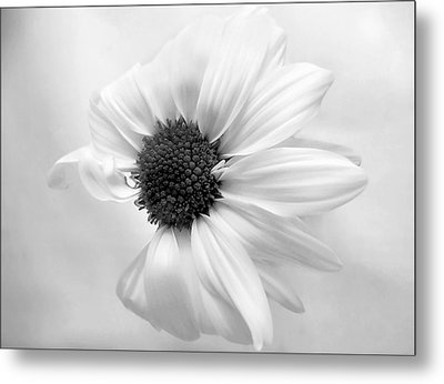 Metal Print featuring the photograph Portrait Of A Daisy by Louise Kumpf