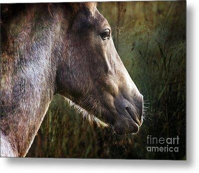 Portrait Of A Dreaming Horse Metal Print by Angel Ciesniarska