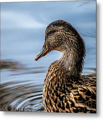 Portrait Of A Duck Metal Print by Bob Orsillo