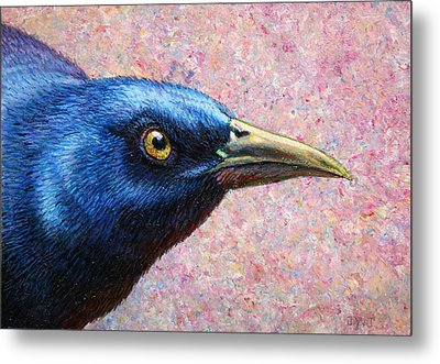 Portrait Of A Grackle Metal Print by James W Johnson