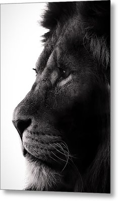 Portrait Of A Lion Metal Print by Martin Newman
