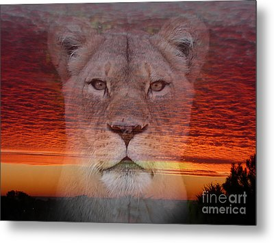 Portrait Of A Lioness At The End Of A Day Metal Print