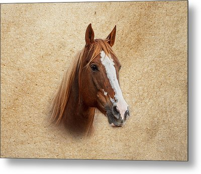 Portrait Of A Mare Print Metal Print