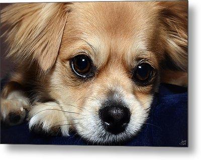 Portrait Of A Pup Metal Print by Lisa Knechtel