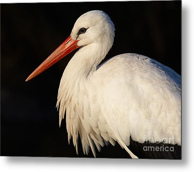 Portrait Of A Stork With A Dark Background Metal Print
