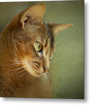 Portrait Of An Abyssinian Cat With Textures Metal Print by Wolf Shadow  Photography