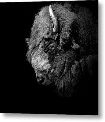 Portrait Of Buffalo In Black And White Metal Print by Lukas Holas