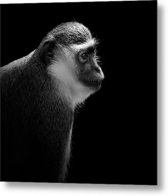 Portrait Of Green Monkey In Black And White Metal Print by Lukas Holas
