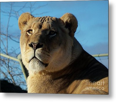 Portrait Of The Mighty Queen Metal Print by Lingfai Leung