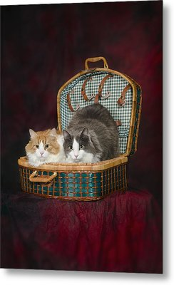 Portrait Of Two Cats In A Basketst Metal Print by Corey Hochachka