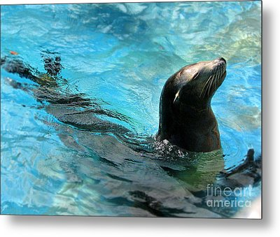 Metal Print featuring the photograph Posing Sea Lion by Kristine Merc