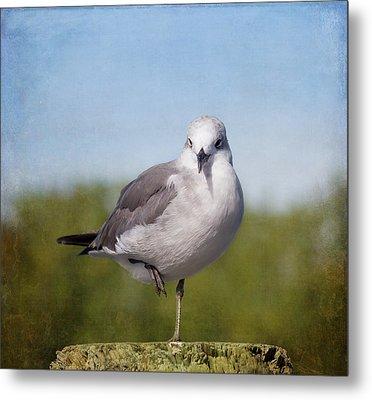 Posing Seagull Metal Print by Kim Hojnacki