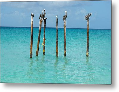 Posted Seagull Metal Print by David and Lynn Keller