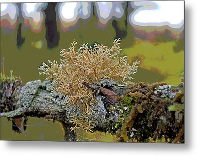 Posterized Antler Lichen Metal Print by Cathy Mahnke