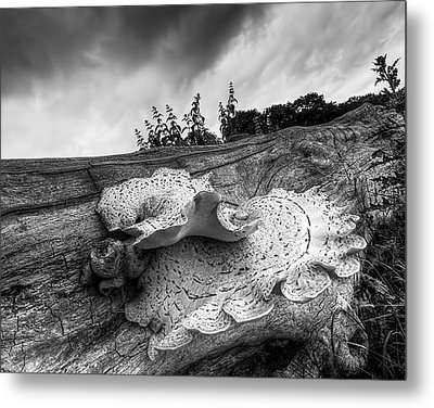Pot Of Gold - Glowing Fungi Bw Metal Print by Gill Billington