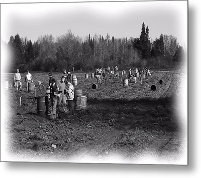 Potato Harvest 2 Metal Print