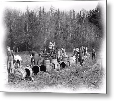 Potato Harvest 21 Metal Print