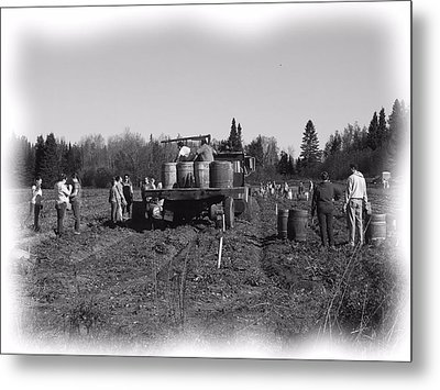 Potato Harvest 3 Metal Print
