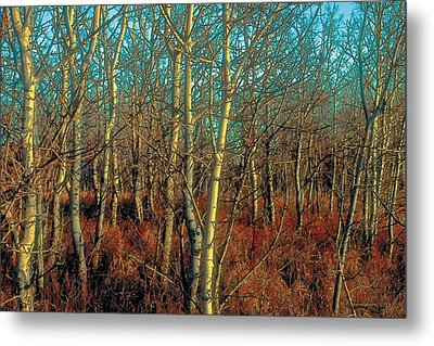 Prairie Autumn 8 Metal Print by Terry Reynoldson