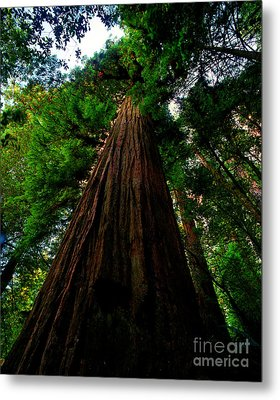 Prairie Creek Redwoods State Park 13 Metal Print by Terry Elniski