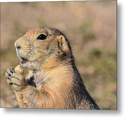 Prairie Dog Metal Print by Robin Williams