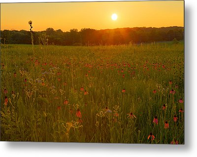 Prairie Flowers With Setting Sun Metal Print