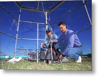Prairie Grass Photosynthesis Research Metal Print by Scott Bauer/us Department Of Agriculture