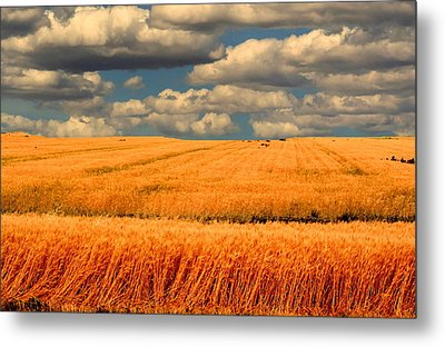 Prairie Vista Metal Print by Larry Trupp