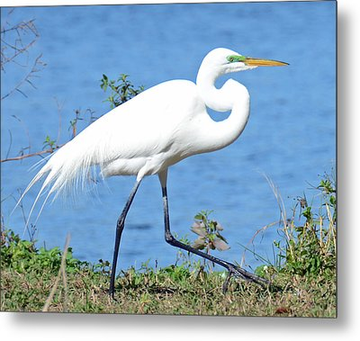 Prancing Metal Print by Julie Cameron